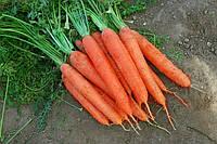 МАТЧ F1 / MATCH F1 - морковь, Clause 100 000 семян