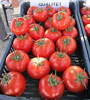 Т-97082 (КВАЛИТЕТ F1) / Т-97082 (QUALITET F1) - томат полудетерминантный, Syngenta 500 семян