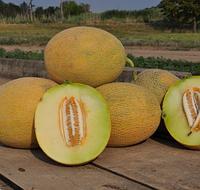 РАДМИЛА F1 / RADMIRA F1 — Дыня, Yuksel Seeds, 1 000 семян