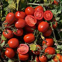 1015 F1 – томат детерминантный, Lark Seeds (Heinz Seeds) 500 семян