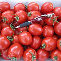 ШКИПЕР F1 / SHKIPER F1  — томат детерминантный, Lark Seeds 10 000 семян
