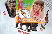 """Набор детских карточек """"Дикие животные"""", 15 шт в наборе"""