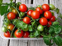 РУБИНЕК / RUBINEK  — томат детерминантный, SEMO 5 грамм