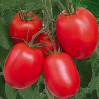 КАРЛА / CARLA  — томат детерминантный, SEMO 5 грамм