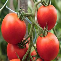 ТОРНАДО F1 / TORNADO F1 — томат индетерминантный, SEMO 100 семян