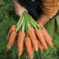КАРДИФ F1 /  CARDIFF F1 - морковь, Bejo 100 000 семян 1,6-1,8