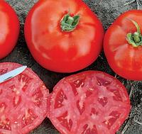 1504 F1 — томат детерминантный, Lark Seeds 5 000 семян