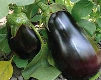 МОДАР F1 / MODAR F1 — Баклажан, Lark Seeds, 1 000 семян