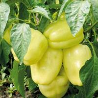 ДИАМАНТ F1 / DIAMANT F1 — перец сладкий, Lark Seeds 500 семян