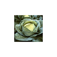 БАРТОН F1 / BARTON F1 - Капуста Белокочанная, Hazera, 2 500 семян
