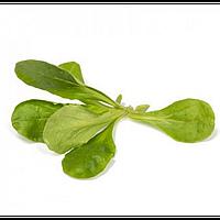 ДИОНА / DIONE — салат, Rijk Zwaan 100 000 семян
