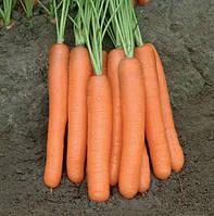 МОРЕЛИЯ F1 / MORELIA F1 - морковь, Rijk Zwaan 25 000 калиброванных семян 1,6-1,8