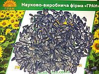 Подсолнечник ТОЛЕДО под гранстар, Семена устойчивые к гербициду Экспрес. заразиха A-F. Экстра