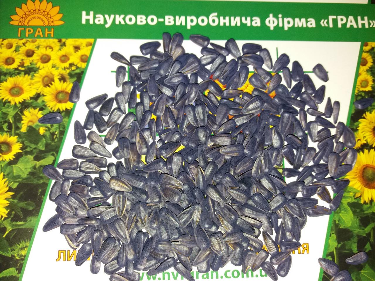 Семена подсолнечника под Гранстар ТОЛЕДО, Гибрид устойчивый к засухе и заразихе A-F. Экстра - ТОВ АВС Стандарт в Днепре