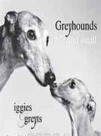 Amanda Jones Greyhounds Big and Small: Iggies and Greyts