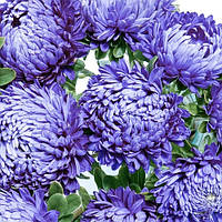 Семена Астра хризантемовидная Сиринга голубая 1 грамм Satimex