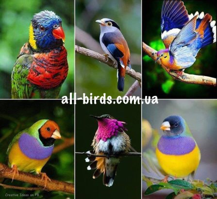Экзотические птички