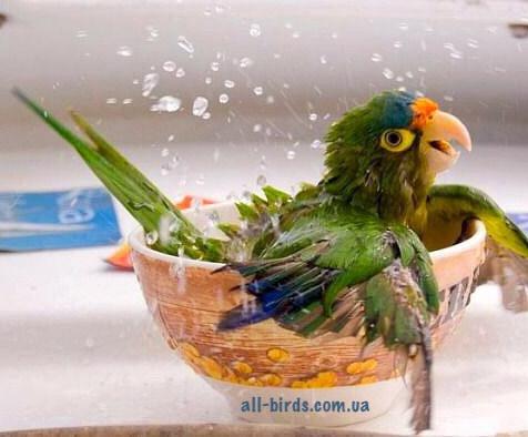Купалки для попугаев и птиц