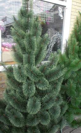 Искусственная елка 2.6 метра , сосна пушистая, фото 2