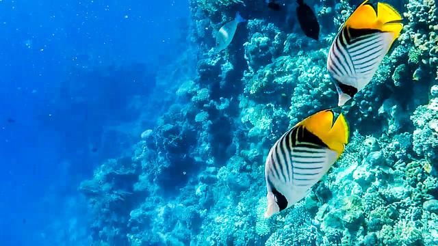 Красное море - рай для владельцев экшн-камер!