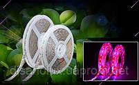 Фитолента для растений 3red +1blue SMD 5050  300Led 60шт/м  12в  IP65  5м, фото 2