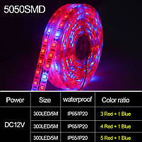Фито лента для растений 4red+1blue SMD 5050  300Led 60шт/м  12в  IP20 5м, фото 4