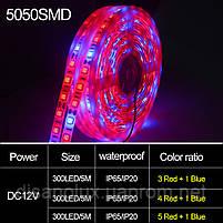 Фитолента для растений 4red +1blue  SMD 5050  300Led 60шт/м  12в  IP65 5м, фото 4