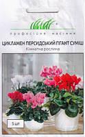 Семена Цикламен Персидский гигант смесь 5 семян Hem Zaden