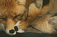 """Набор для вышивания """"Мохнатый поцелуй"""", фото 1"""