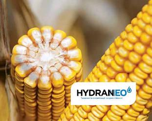 Семена гибрида кукурузы Адевей/ADEVEY среднеранний ФАО 290