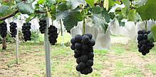 Мешки от ос на виноград красные 5 кг, 28*40 см (сетка-мешок для винограда). От ос, мошек и др. насекомых!!!, фото 3