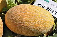 Мазин F1 (Маф 35) - дыня, 1 000 семян, Clause (Клоз), Франция