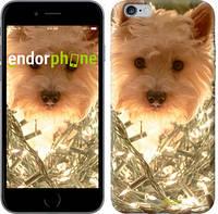 "Чехол на iPhone 6 Plus Собака с гирляндой ""4111c-48-9076"""