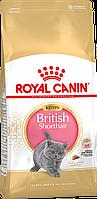 Royal Canin BRITISH SHORTHAIR Kitten 10кг - корм для котят британской короткошерстной кошки