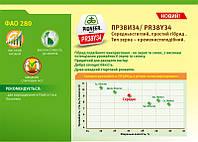 Гибрид кукурузы ПР38И34/ PR38Y34 (ФАО 280)