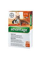 Bayer Advantage (адвантейдж) краплі від бліх для котів та кроликів до 4 кг