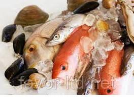 Замораживание и глазирование рыбы