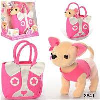 Собачка в сумке Кикки М 3641 чихуахуа Chi Chi Love