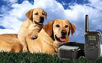Axsel Fox PT-100 радиоошейник для тренировки собак