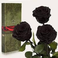 Три долгосвежие розы Черный Бриллиант в подарочной упаковке 228-1841235