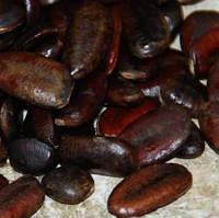 Семена Азимины \Украинская селекция\