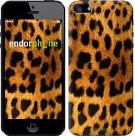 """Чехол на iPhone 5 Шкура леопарда """"238c-18-8079"""""""