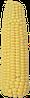 Гибрид кукурузы ДНЕПРОВСКИЙ 257 СВ ФАО 290  (Вайбранс 500FS  + Максим XL 035)