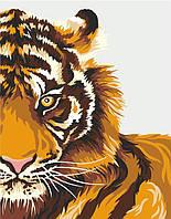 Картины по номерам Тигр (RS-N0001340) 35 х 45 см