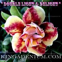 Адениум семена Double Light and Deligth