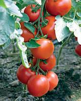 Как вырастить лучшие томаты