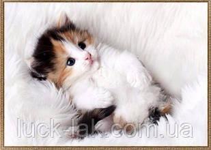 Алмазная вышивка котенок на белом одеяле 40х30 см, частичная выкладка НА ПОДРАМНИКЕ 33х24 см
