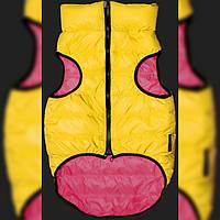 Одежда для терьера, чихуахуа Hallo EXstraS1