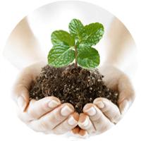 Препараты для профилактики болезней и ухода за растениями