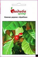 Кофейное дерево Арабика 1 г (Садыба Центр)